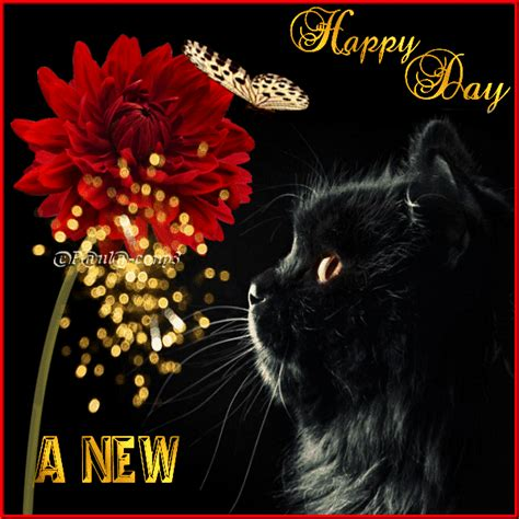 A new happy day