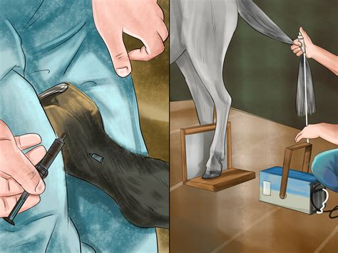 How to Identify a Hoof Abscess in Horses: 11 Steps (with